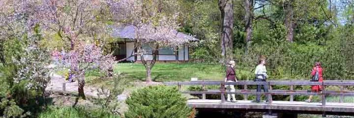 Экспозиция «Японский сад»